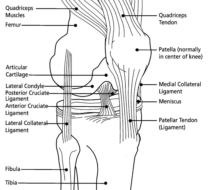 Recognition of Knee Injury - Knee Injury and Prevention